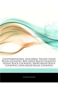 Articles on Calyptorhynchus, Including: Yellow-Tailed Black Cockatoo, Red-Tailed Black Cockatoo, Glossy Black Cockatoo, Short-Billed Black Cockatoo, L