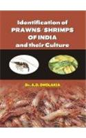 Identification of Prawns/Shrimps and Their Culture